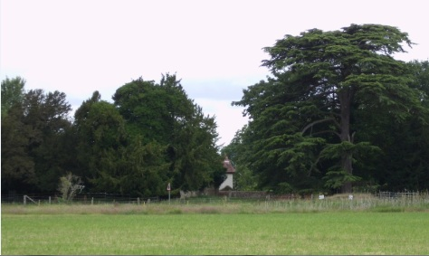 The Churchyard, as viewed from the field, with Yews and Cedar