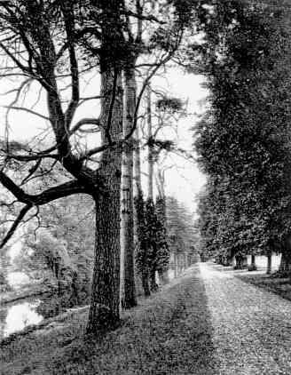 The Drive and the River Loddon, 1919