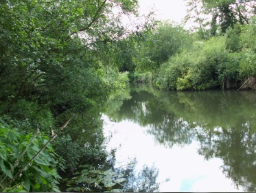 The River Loddon mill channel, looking upstream