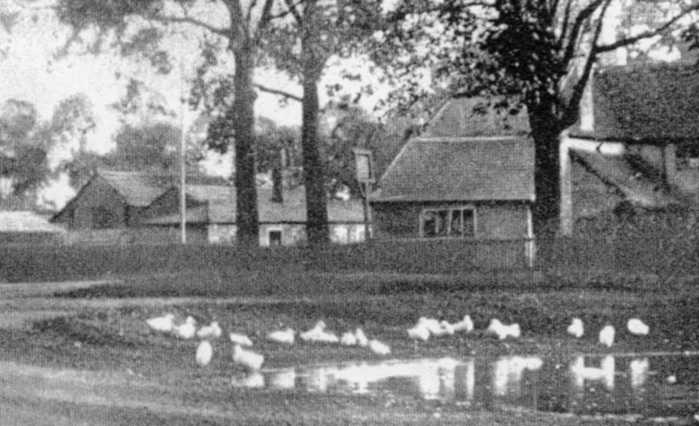 The Parish Cottages by the Bull in Swallowfield Road, at a time when the Pond still contained water